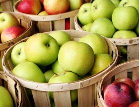 panier de pommes monodiète