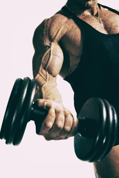 xénoandrogènes musculation stéroides légaux